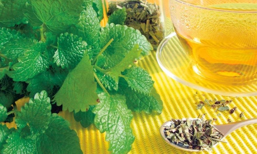 Маточина – Природен лек против стрес и несоница