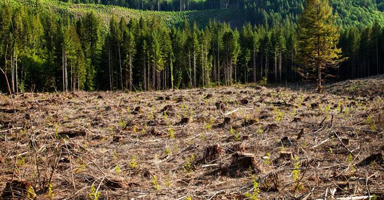 На Шара исечена шума на територија колку половина Скопје