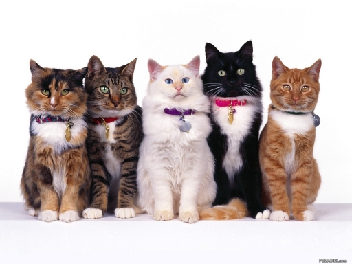 Добра вест за љубителите на мачки: Научниците открија вакцина против алергија на мачките