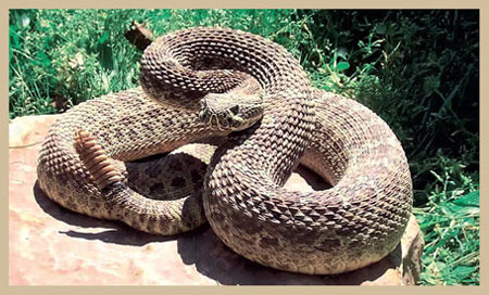 СЗО: Годишно од 3 милиони каснати од змија умираат 130.000 луѓе