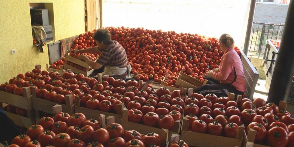 РЕВОЛТ НА ЗЕМЈОДЕЛЦИТЕ ВО СТРУМИЧКО: Цената на доматите за еден ден од 25 падна на 10 денари