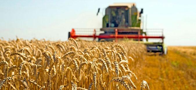 Земјоделците не се откажуваат од вкупно 12 денари за килограм пченица