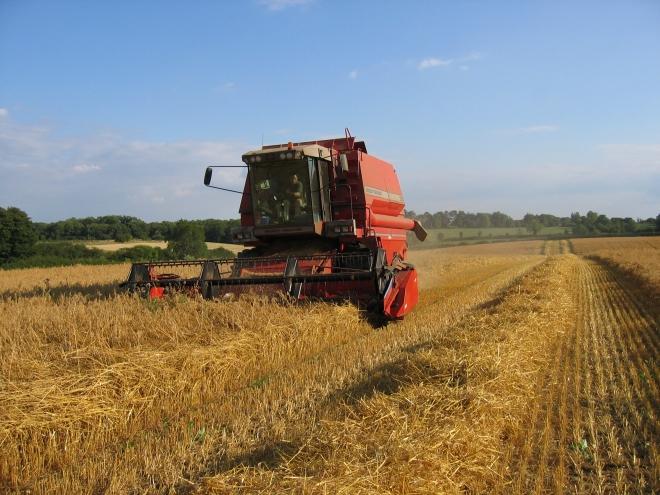 Незадоволство од НФФМ: Македонската пченица се откупува по најниска цена во регионот