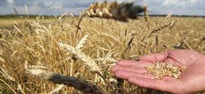 Шефот на кабинетот на Николовски ги искара производителите на пченица