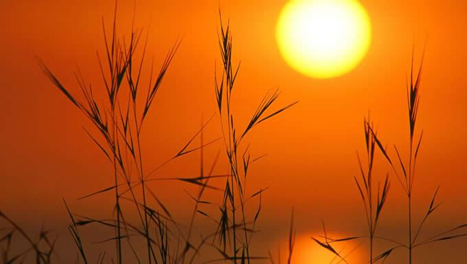 Време: Сончев ден до 36 степени и УВ 9