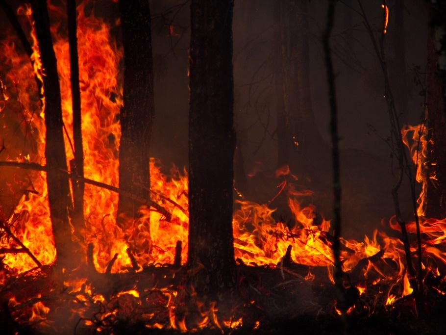 Грција: За 24 часа 57 шумски пожари