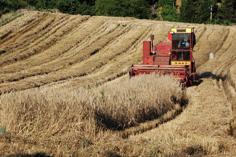 НЕЗАДОВОЛСТВО КАЈ ЗЕМЈОДЕЛЦИТЕ: Лаже МЗВШ дека пченицата се откупува по 10,5 денари, се плаќа од 7 до 8 за килограм