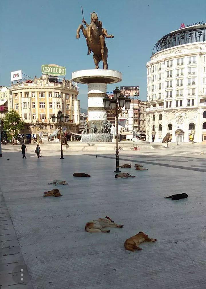 Вчера три лица искасани од кучиња скитници во Скопје