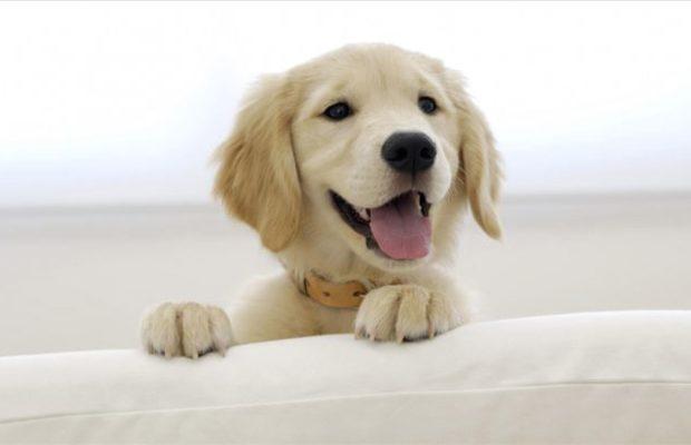Ветеринарната комора апелира да се искористи можноста за бесплатно чипирање на милениците