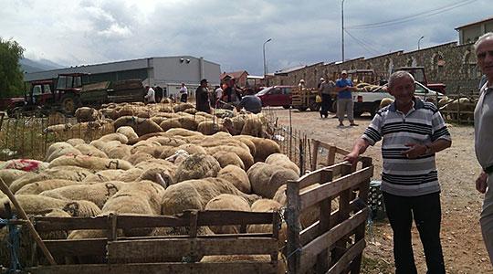 Утре во Тетово: Овчарите со нови барања до Владата