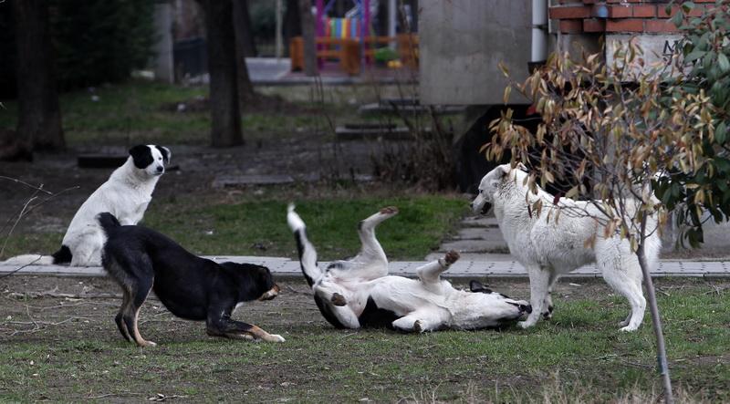 АХВ: Има 100.000 бесплатни микрочипови и само 9.200 евидентирани домашни миленици