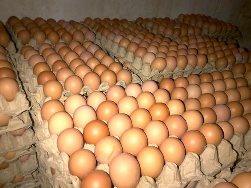 Македонските јајца со повисока цена од грчките, бугарските и полските