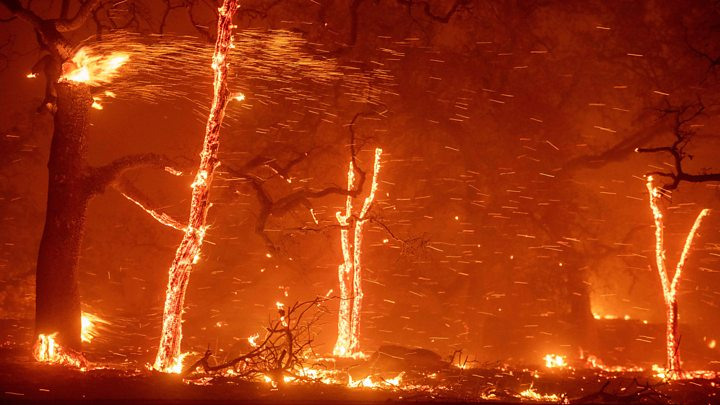 МЗШВ: Пожарите се поради палење стрништа и ниви