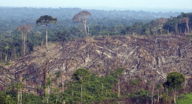 БРАЗИЛ: За една година уништена прашума со големина на Порторико