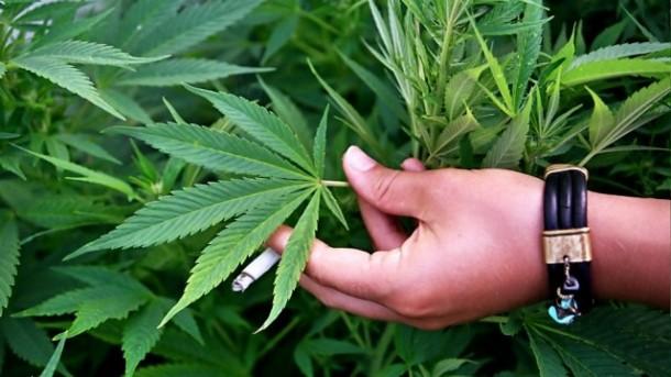 Калифорнија: Се бришат 85.000 пресуди за марихуана