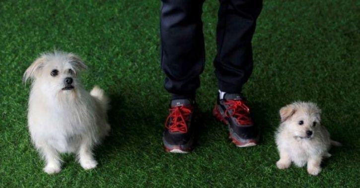 Прво клонирано куче во Кина (ФОТО)