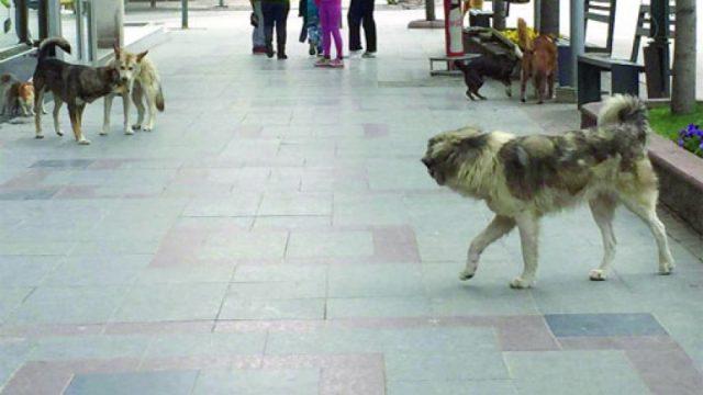 """МВР: Еден тинејџер и возрасен маж каснати од куче на улицата """"Кеј 13-ти Ноември"""" во Скопје"""