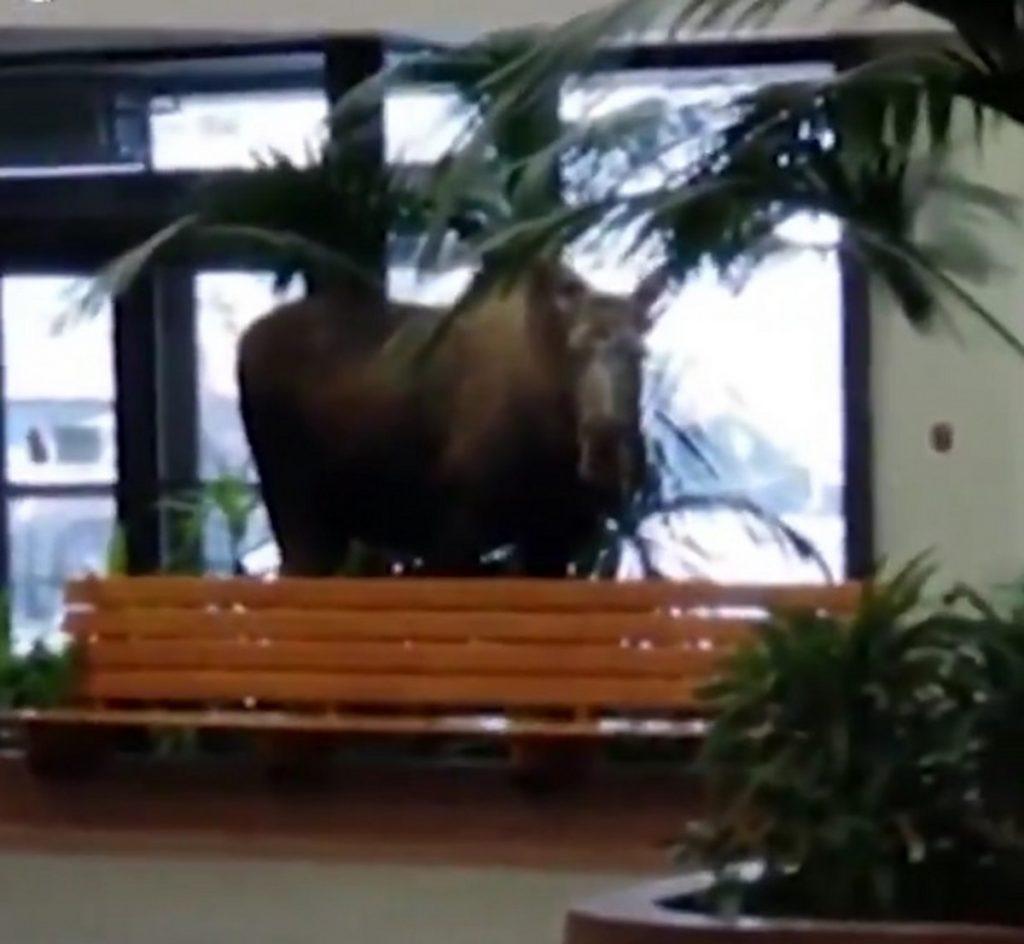 Екстремен студ во Аљаска: Лос влезе во болница во Енкориџ на вегетаријанска ужина