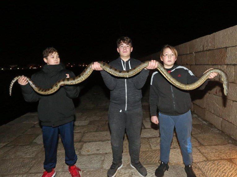 (фото) АНАКОНДА ВО ХРВАТСКА: Деца кај Водице од морето извадија змија долга 2,5 метри
