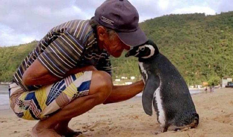 Секоја година пингвин препливува 8.000 километри за да го посети човекот кој го спасил (ВИДЕО)