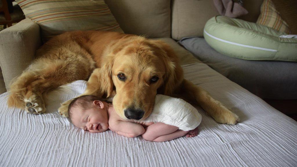 Златен ретривер и бебе (ВИДЕО)
