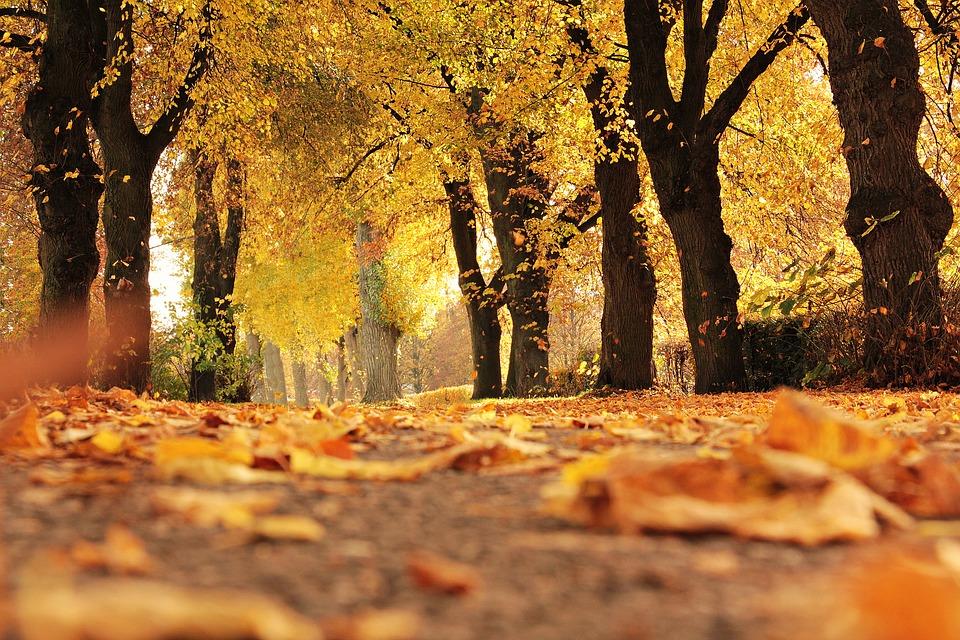 Време: Среде есен уште еден летен ден