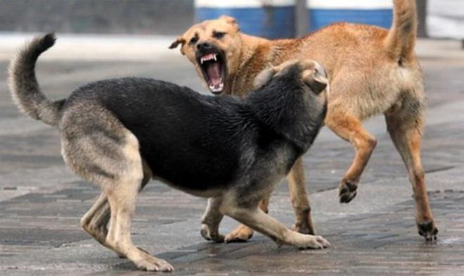 Скопје: Жена и дете искасани од улични кучиња во паркот на улица Христо Татарчев