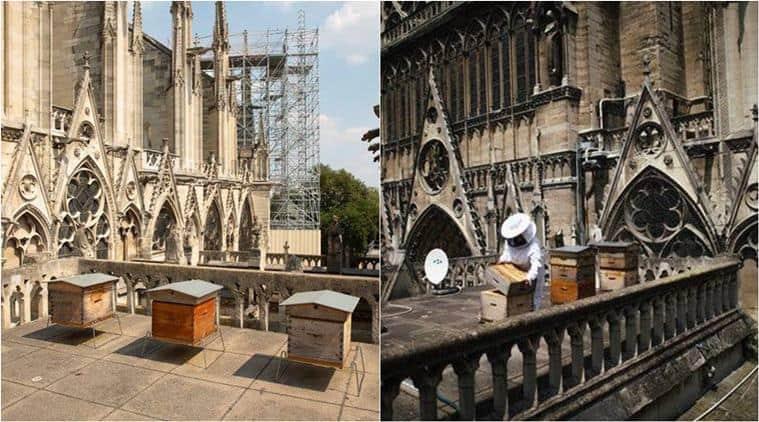 """Го преживеале пожарот во Нотр Дам: """"Европската пчели никогаш не ги напуштаат кошниците"""""""