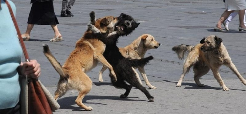 Со секира убиени две кучиња во Аеродром