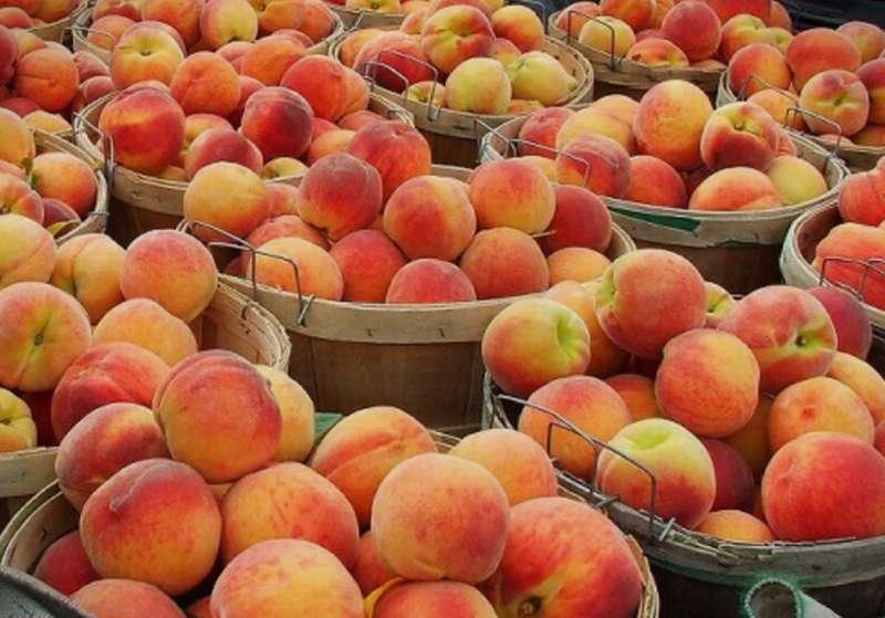 МЗШВ: Русија ја укина забраната за увоз на коскесто овошје од Македонија