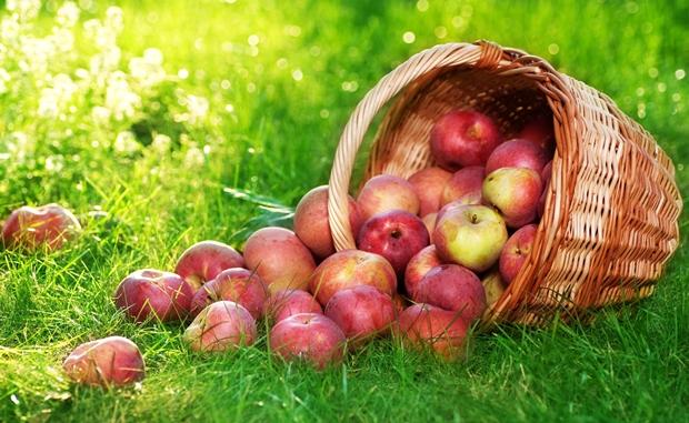 Во семките од јаболкaтa се крие смртоносен отров