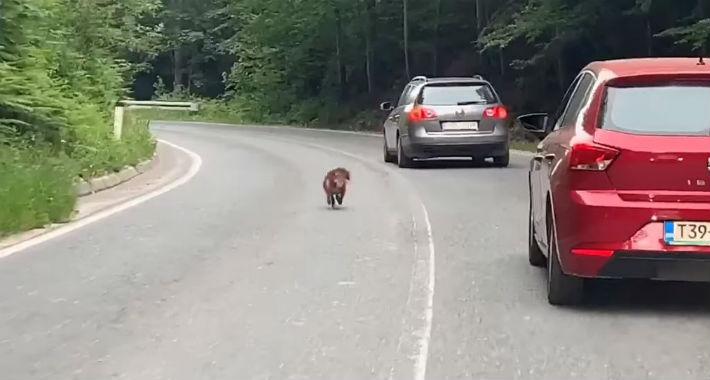 Куче кое неуморно трча по пат во БиХ растажи многумина (ВИДЕО)