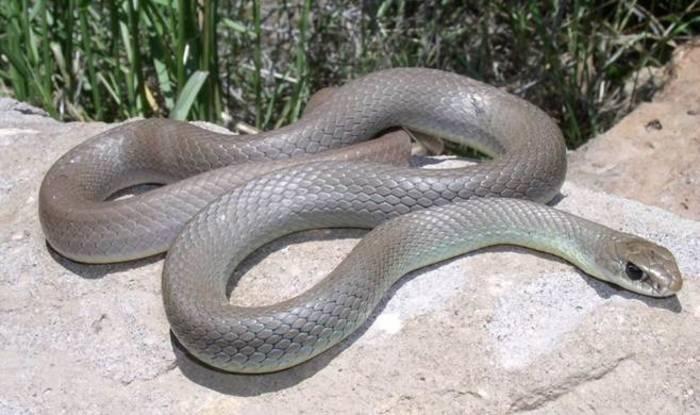 Топлото време ги раздвижи змиите, лекарите предупредуваат – бидете внимателни
