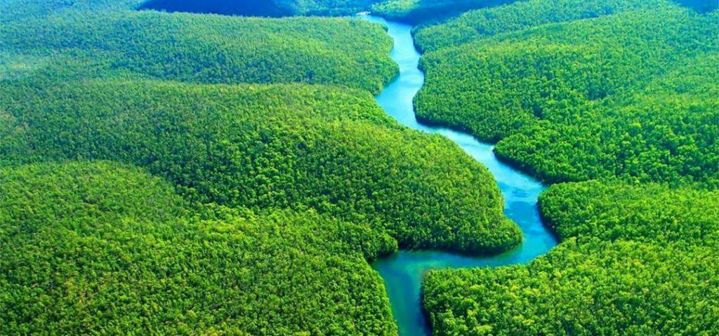 Само со нова шума на милијарда хектари може да се спаси Земјата