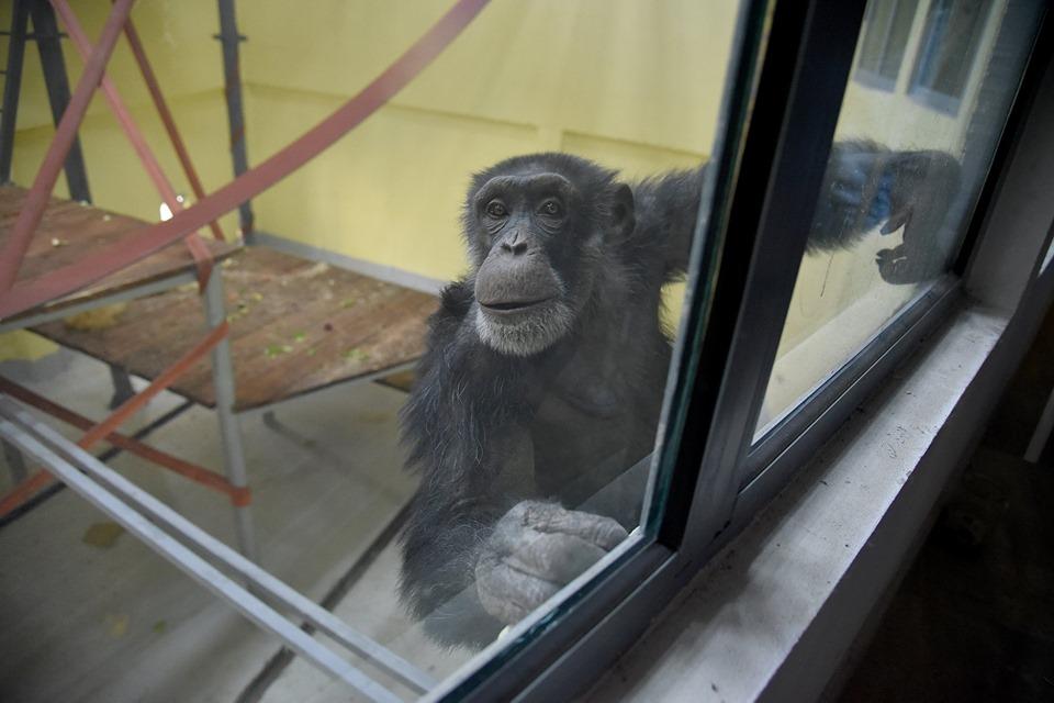 (фото) ШИЛЕГОВ: Коко се врати дома