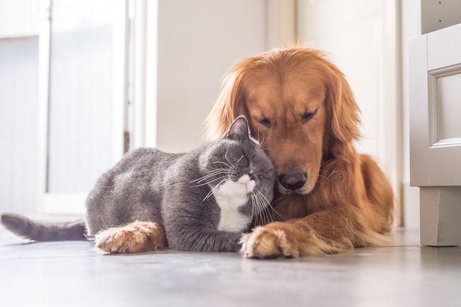 Истражување во САД: Мачињата и кучињата го топат стресот на газдите