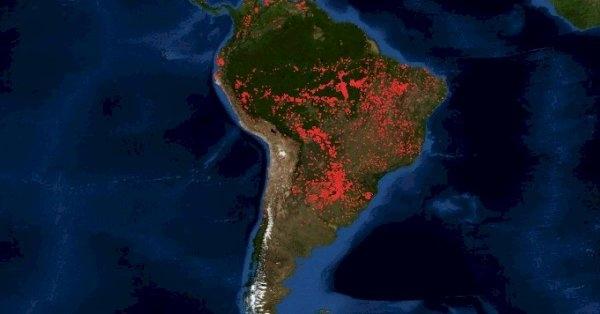Пожари во Амазонија: Без Амазонската прашума светот ќе остане без бели дробови
