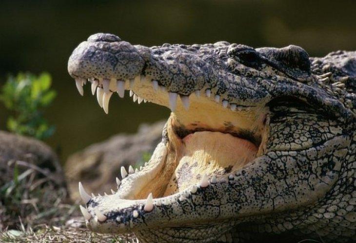 Во Шведска: Крокодилот на Фидел Кастро гризна човек