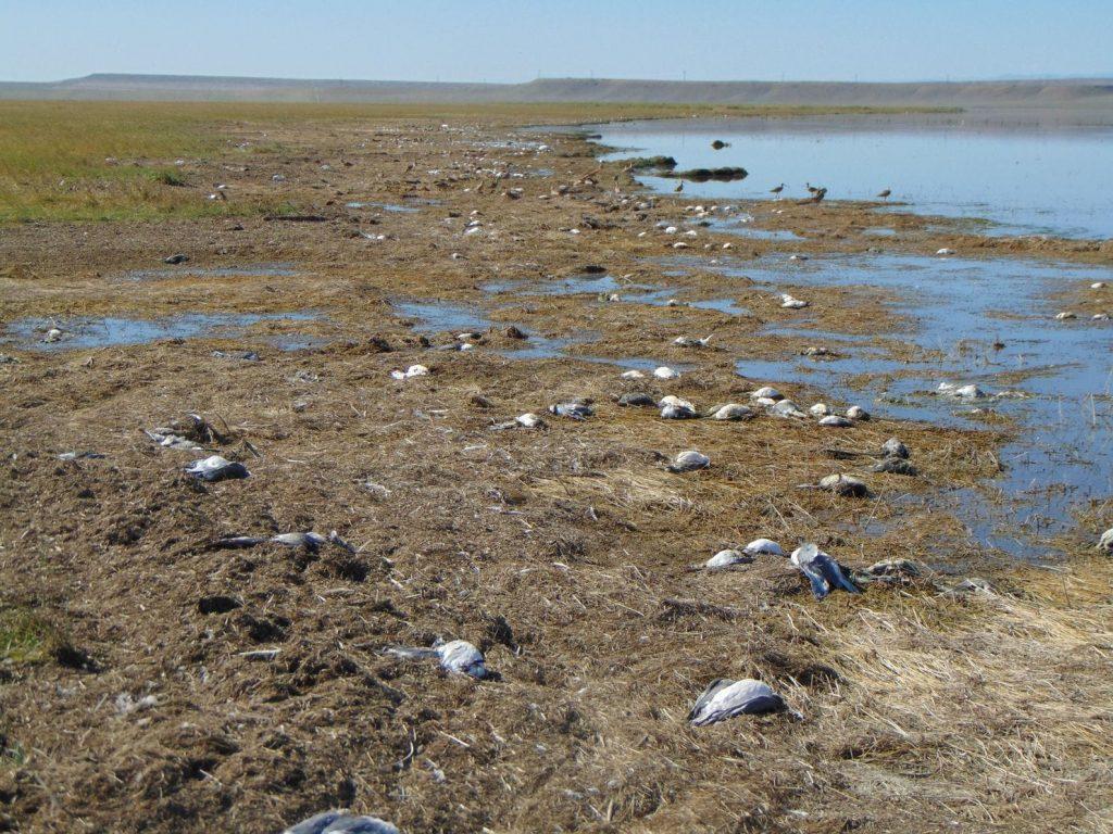Тажна глетка во САД: Град уби повеќе од 11.000 птици во Монтана