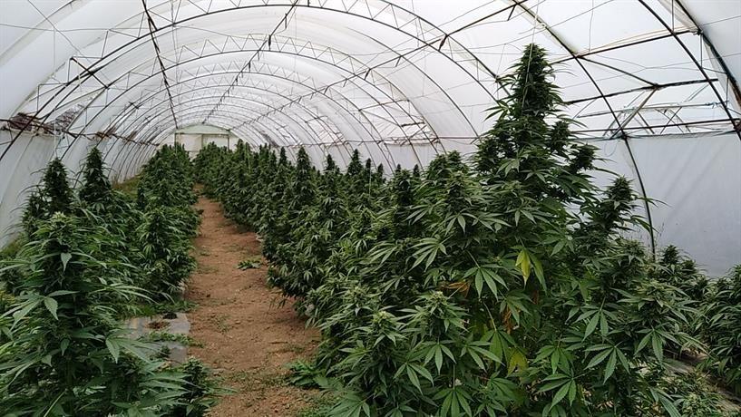 ВЛАДА: Тече постапката за легализација на марихуаната, работната група одржа втор состанок