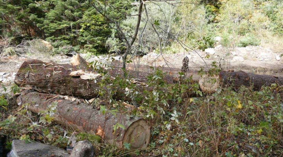 Да ја спасиме Попова Шапка: Се уништува шумата за изградба на нови објекти на Шара
