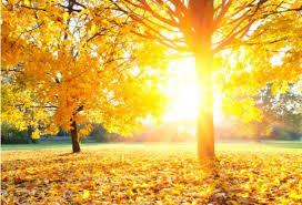 Време: Есен со летно сонце и до 31 степен