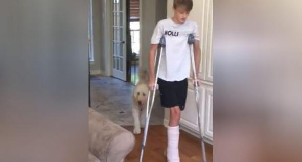 Кучето го насмеа Интернетот имитирајќи го неговиот повреден млад сопственик (ВИДЕО)