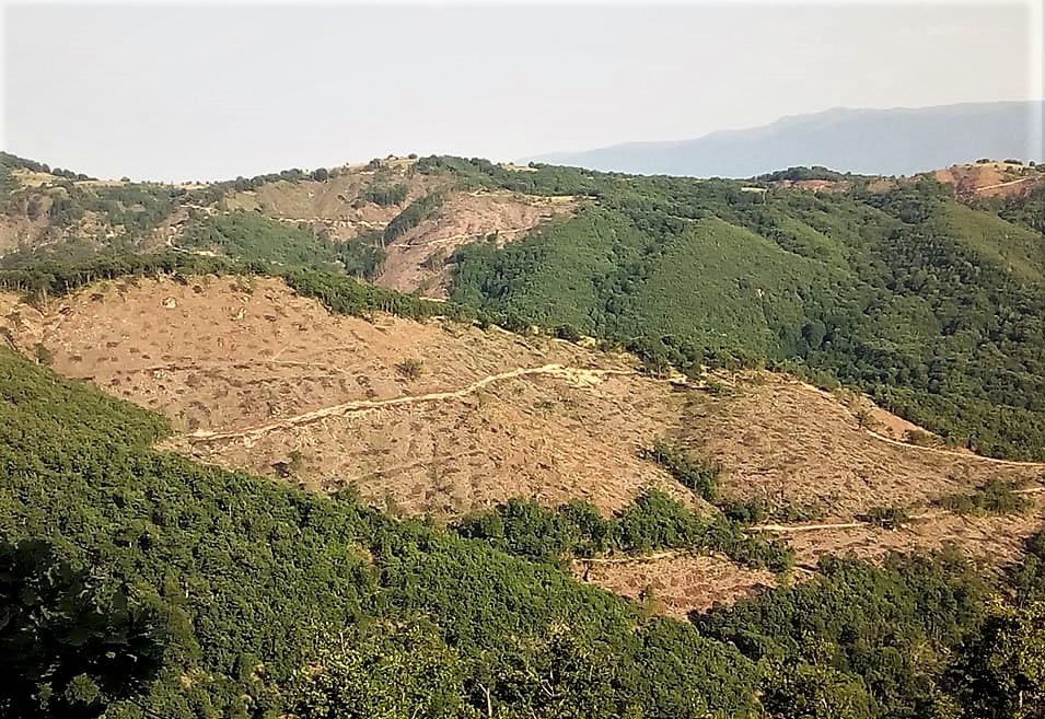 НАРОДЕН ЖИВОТ ВО МАКЕДОНИЈА: Колку глуждој на наврзоков, толку години да трајт шумава