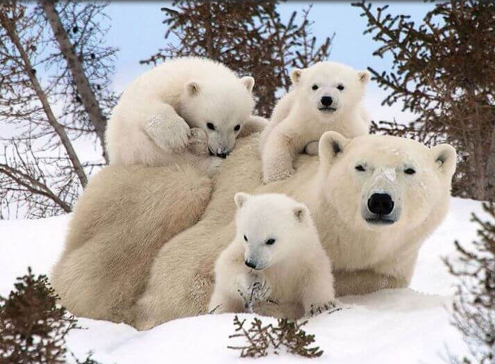14 симпатични семејни фотографии на животни (ФОТО)
