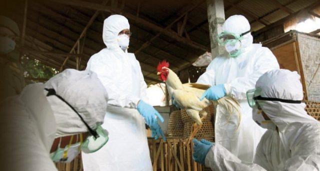 "Романија: По три години пак ""долета"" птичји грип"