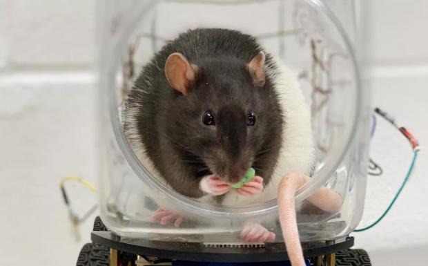 ЕК: При експерименти, најмногу страдаат лабораториските животни во Франција, Германија, Финска и Белгија