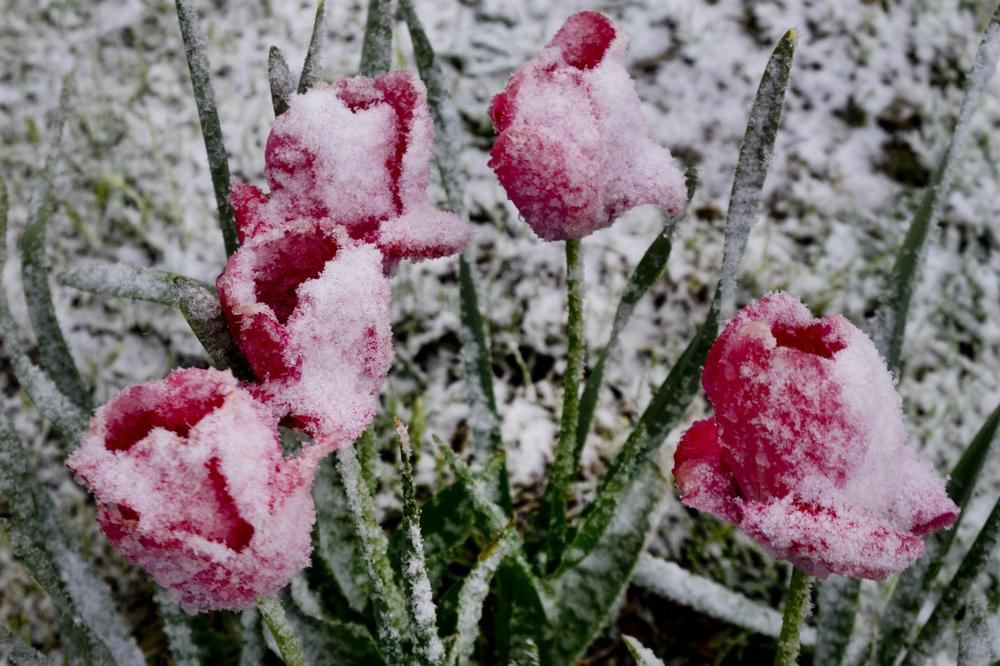Време: Облачно со повремен пролетен снег и температура од минус еден до 10 степени