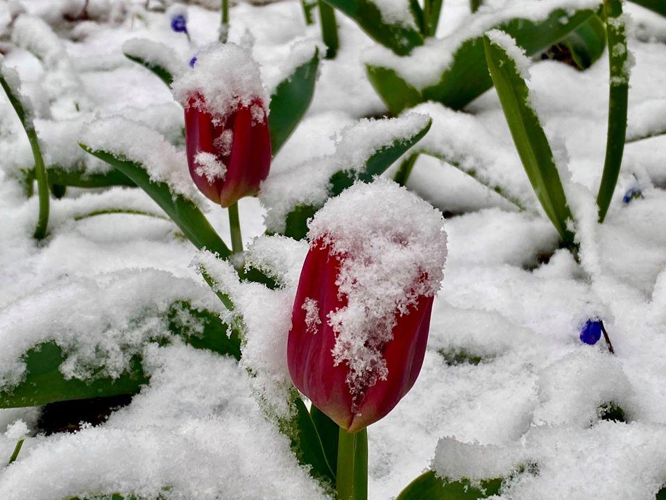 (ФОТО ГАЛЕРИЈА) Македонија под снег – 1 април 2020 година