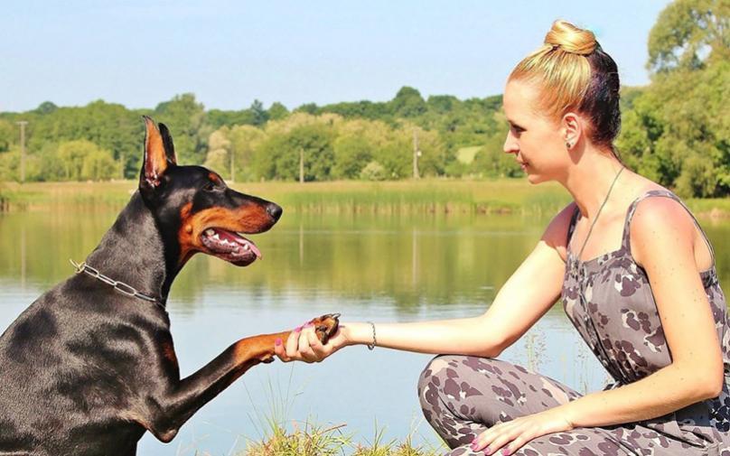 Јапонски научници: Наскоро уред за комуникација меѓу луѓето и животните